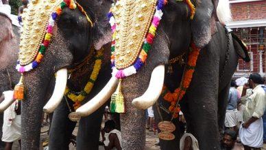 elephants-743304_640