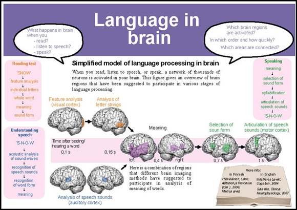 acquisition adult brain language mind news second