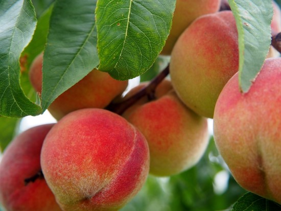 Live Stream - The Peach Tree of Adjectives